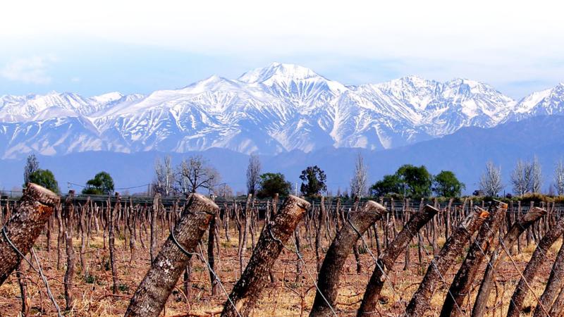 Proemio Wines